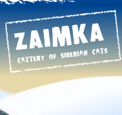 Cattery of  siberian cats Zaimka